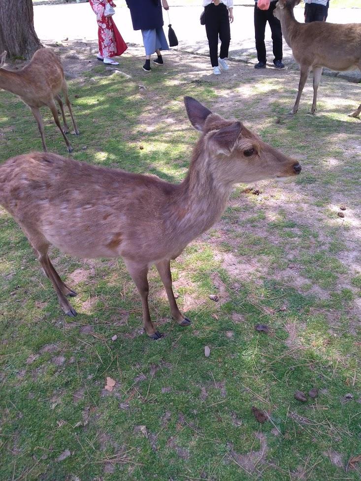 奈良公園の写真です。